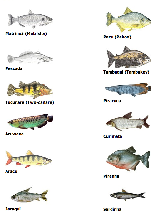 Keeping kosher in brazil world cup edition for List of fish to eat
